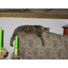 moja kochana kotka Lakutka (dodane 29.05.2008)